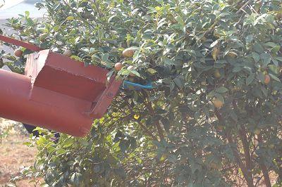 水果采摘装置设计